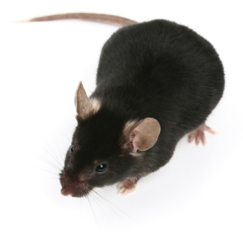 ATG Pest Control - Commercial Services